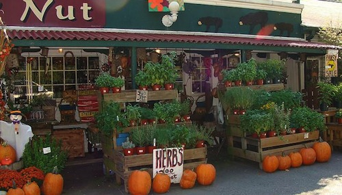 Seasonal Plants & Herbs at The Hickory Nut